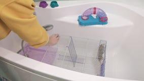 Μια νέα γυναίκα φροντίζει ένα κατοικίδιο ζώο, πλυσίματα κάτω από μια βρύση με το νερό και καθαρίζει το κλουβί στο λουτρό, ένα τρω φιλμ μικρού μήκους