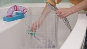 Μια νέα γυναίκα φροντίζει ένα κατοικίδιο ζώο, πλυσίματα κάτω από μια βρύση με το νερό και καθαρίζει το κλουβί στο λουτρό, ένα τρω απόθεμα βίντεο