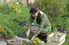 Μια νέα γυναίκα φροντίζει την αλπική φωτογραφική διαφάνεια Στοκ Φωτογραφία
