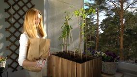 Μια νέα γυναίκα χύνει το έδαφος στο εμπορευματοκιβώτιο και τη φύτευση των σποροφύτων στο μπαλκόνι απόθεμα βίντεο