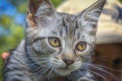 Μια νέα εσωτερική γάτα Στοκ φωτογραφίες με δικαίωμα ελεύθερης χρήσης