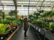 Μια νέα κομψή γυναίκα που κοιτάζει βιαστικά έναν διάδρομο των φρέσκων εγκαταστάσεων ενός τοπικού θερμοκηπίου λ στοκ εικόνες