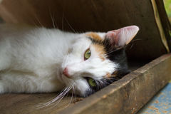 Μια να βρεθεί γάτα tricolor Στοκ φωτογραφίες με δικαίωμα ελεύθερης χρήσης