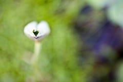 Μια ντροπαλή καρδιά Στοκ φωτογραφίες με δικαίωμα ελεύθερης χρήσης