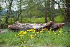 Μια ξύλινη σύνδεση που αρχειοθετεί των πικραλίδων Άποψη επαρχίας με ένα κούτσουρο και τα όρη στο δεύτερο σχέδιο στοκ φωτογραφίες