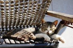Οκνηρή γάτα Στοκ φωτογραφίες με δικαίωμα ελεύθερης χρήσης