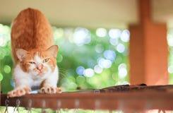 Μια οκνηρή γάτα με το πράσινο υπόβαθρο Στοκ φωτογραφία με δικαίωμα ελεύθερης χρήσης