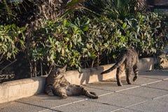 Μια οκνηρή γάτα πόλεων βρίσκεται στην οδό, που παίρνει τη σιέστα και δεν πιέζει χρονικά οπουδήποτε Κλείστε επάνω την όψη 4 στοκ εικόνα