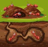 Μια ομάδα μυρμηγκιών εργασίας στην τρύπα ελεύθερη απεικόνιση δικαιώματος