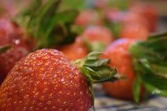 Μια ομάδα πρόσφατα πλυμένων φραουλών Στοκ εικόνα με δικαίωμα ελεύθερης χρήσης