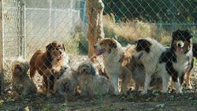 Μια ομάδα σκυλιών έξω από το φράκτη Σκυλιά σε ένα καταφύγιο ή έναν ζωικό βρεφικό σταθμό φιλμ μικρού μήκους
