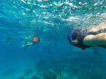 Μια ομάδα τουριστών που κολυμπούν με αναπνευτήρα στο μπλε θαλάσσιο νερό στοκ εικόνες