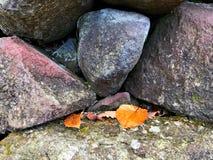 Μια ομάδα φύλλων φθινοπώρου σε έναν σωρό του βράχου Στοκ Εικόνες
