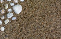 Μια ομάδα όμορφων μικρών θαλασσινών κοχυλιών με το διάστημα αντιγράφων στοκ φωτογραφίες