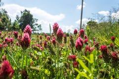 Μια ομάδα ρόδινων λουλουδιών από την ψηλή πράσινη χλόη Στοκ φωτογραφία με δικαίωμα ελεύθερης χρήσης