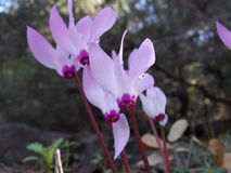 Μια ομάδα τα λουλούδια που τακτοποιούνται κάθετα στη φύση Στοκ Φωτογραφίες