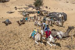 Μια ομάδα των καμηλών περιμένει τους τουρίστες στο πορθμείο κατά μήκος της Δυτικής Όχθης του ποταμού Νείλος στην Αίγυπτο στοκ φωτογραφία