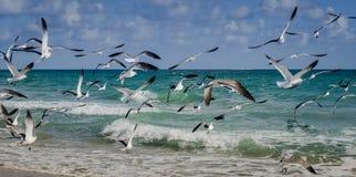 Μια ομάδα seagulls που περιπλανιούνται στην παραλία Στοκ εικόνες με δικαίωμα ελεύθερης χρήσης