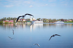 Μια ομάδα seagulls που πετούν πέρα από τον ποταμό Βόλγας κοντά στην πόλη Myshkin (Ρωσία) στοκ εικόνες με δικαίωμα ελεύθερης χρήσης