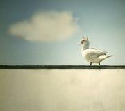 Περπάτημα στην προεξοχή στοκ εικόνες