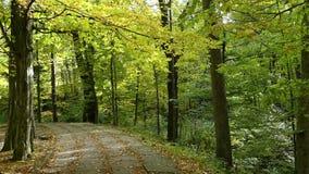Μια πάροδος πάρκων από το σφένδαμνο και τα δέντρα στην Ουκρανία το φθινόπωρο απόθεμα βίντεο