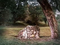 Μια πέτρα κάτω από το δέντρο στοκ εικόνες