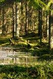 Μια παγωμένη λίμνη την άνοιξη σε ένα πράσινο άνετο δάσος στοκ εικόνες