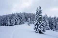 Μια παγωμένη όμορφη ημέρα μεταξύ των υψηλών βουνών και των αιχμών είναι μαγικά δέντρα που καλύπτονται με το άσπρο χνουδωτό χιόνι Στοκ Φωτογραφία