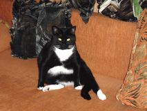 Μια παχιά γάτα ονειρεύεται για ένα μεγάλο πιάτο των τροφίμων στοκ φωτογραφία με δικαίωμα ελεύθερης χρήσης