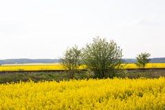 Μια παλαιά διαδρομή σιδηροδρόμων μεταξύ των κίτρινων τομέων βιασμών Στοκ Εικόνες