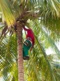 Μια περικοπή νεαρών άνδρων ένας φοίνικας στην Κούβα 2 στοκ φωτογραφίες