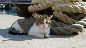 Μια περιπλανώμενη γάτα βρίσκεται δίπλα στο στυλίσκο πρόσδεσης και την αλυσίδα σκαφών s απόθεμα βίντεο