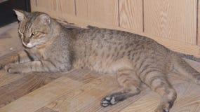 Μια περιπλανώμενη γάτα στο γραφείο περιοχών μου στοκ εικόνες