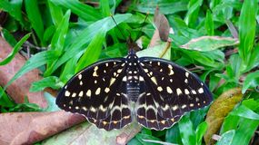 Μια πεταλούδα που στηρίζεται στη χλόη στοκ φωτογραφία με δικαίωμα ελεύθερης χρήσης