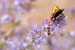 Πεταλούδα και μέλισσα Στοκ εικόνα με δικαίωμα ελεύθερης χρήσης