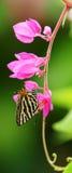 Μια πεταλούδα με τα λουλούδια Στοκ Εικόνες
