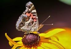 Μια πεταλούδα που σε ένα κίτρινο λουλούδι Στοκ Φωτογραφία