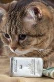 Μια πλούσια γάτα Κεφάλι γατών ` s κοντά στα ασημένια δολάρια ράβδου και μετρητών στοκ εικόνα