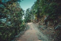 Μια πορεία ανηφορική μέσω ενός δάσους πεύκων Στοκ Εικόνα