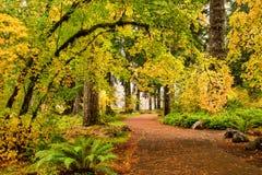 Μια πορεία μέσω του δάσους φυλλώματος φθινοπώρου στο ασήμι πέφτει κρατικό πάρκο, στοκ φωτογραφίες με δικαίωμα ελεύθερης χρήσης