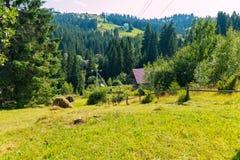 Μια πορεία μεταξύ ενός ξύλινου φράκτη και των θυμωνιών χόρτου που κατεβαίνουν σε ένα κωνοφόρο δάσος Στοκ φωτογραφία με δικαίωμα ελεύθερης χρήσης