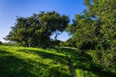 Μια πορεία πεζοπορίας μέσω ενός θερινού τοπίου του πολύβλαστου πράσινου, χλοώδους λιβαδιού και των δρύινων δέντρων στοκ φωτογραφία με δικαίωμα ελεύθερης χρήσης