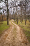Μια πορεία σε ένα όμορφο δάσος στοκ φωτογραφίες