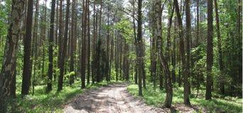 Μια πορεία στο δάσος Στοκ Φωτογραφία