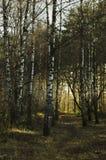 Μια πορεία στο δάσος μια φωτεινή ημέρα στοκ φωτογραφία με δικαίωμα ελεύθερης χρήσης
