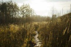 Μια πορεία στο δάσος μια φωτεινή ημέρα στοκ εικόνες