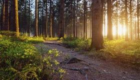 Μια πορεία στο δάσος Στοκ Εικόνες