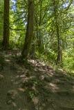 Μια πορεία στο πράσινο δάσος νεράιδων με να περπατήσει τις πέτρες και τα δέντρα Στοκ εικόνα με δικαίωμα ελεύθερης χρήσης