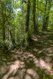 Μια πορεία στο πράσινο δάσος νεράιδων με τα βήματα Ουάσιγκτον, ΗΠΑ Στοκ φωτογραφία με δικαίωμα ελεύθερης χρήσης