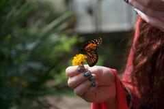Μια πορτοκαλιά, γραπτή πεταλούδα σε ένα κίτρινο λουλούδι στο χέρι μιας κυρίας στοκ φωτογραφία με δικαίωμα ελεύθερης χρήσης